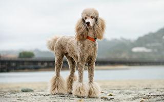 别埋没天分 你家的狗狗可能是天生的游泳健将