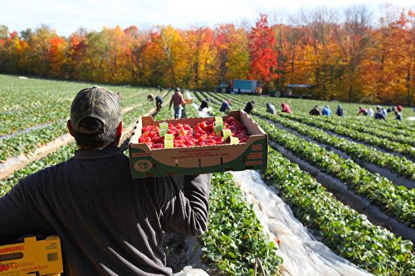 中共病毒疫情下 新泽西农民改变营销策略
