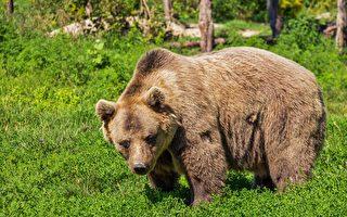 野生熊闯入美国民宅 被两只娇小的小狗赶走
