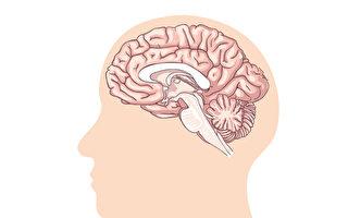 控制視覺、表情的秘密 大腦12對神經一圖看懂