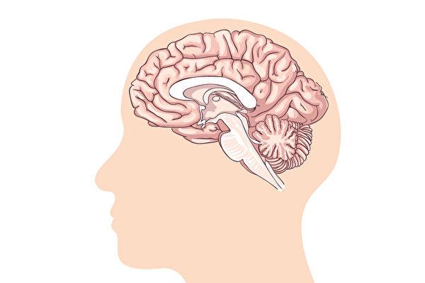 视觉、嗅觉、面部的活动,都受脑神经支配。(Shutterstock)