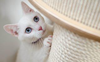 「貓之家」升級 維州協會斥600萬打造貓公寓