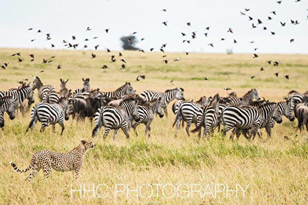 走进非洲(3)非洲农家乐与塞伦盖蒂野生动物
