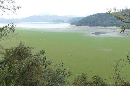 位於大竹湖步道下方的湖底已變成日月潭大草原!旱象意外使湖底成為民眾親子踏青的另類景點,順便機會教育「珍惜水資源」。