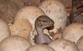 新发现超小恐龙脚印 其主人只有猫大小