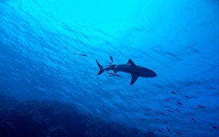 英男奮戰1小時釣到200多公斤鯊魚 最後放生