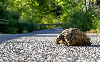 天外飞来一只乌龟 撞破汽车玻璃击中她的头