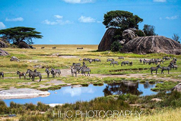 走進非洲(4)塞倫蓋蒂的動物樂園