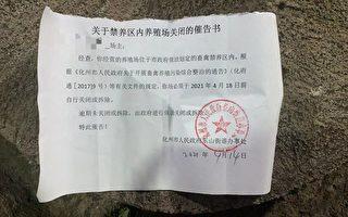 广东养殖政策多变 村民养猪场遭强拆无赔偿
