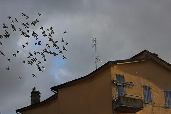 數百隻鳥入侵美國加州民宅 如驚悚電影