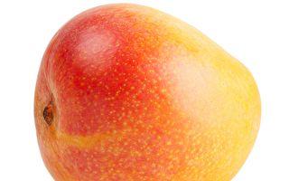 世界最重芒果在哥倫比亞誕生 重達4公斤多
