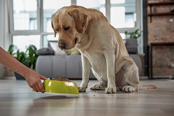 當狗狗年紀大時 2款適合高齡犬的手作鮮食
