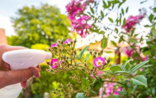 抗病害 這些天然配方讓花茁壯美麗 水果更甜