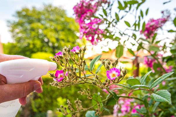 抗病害 这些天然配方让花茁壮美丽 水果更甜