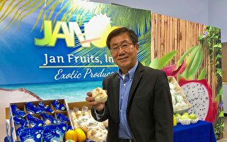邱启宜:日本食用百合种植诀窍