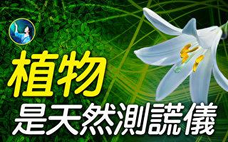 【未解之谜】科学聚焦:人的意念对植物有影响