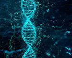 研究揭长寿秘密:超105岁老人拥有独特基因