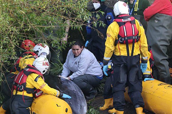 小鬚鯨誤入倫敦水閘 多部門合力助其脫困