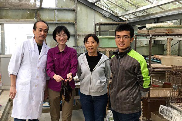 台湾狐蝠濒临灭绝 全台仅剩二百多只