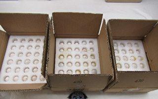 私人购750枚中国蛋入美 统统被销毁