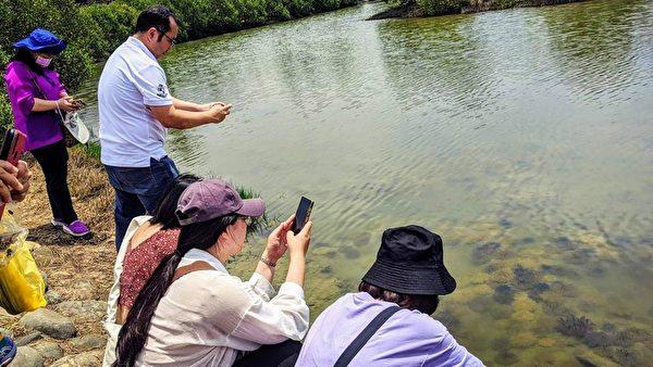 台灣水母湖大爆發逾8萬隻 「活化石」鱟現蹤