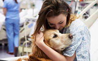 治療犬退休 美國醫院為牠舉行告別儀式