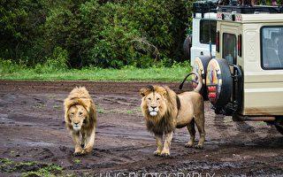 走进非洲(6)恩戈罗恩戈罗自然保护区