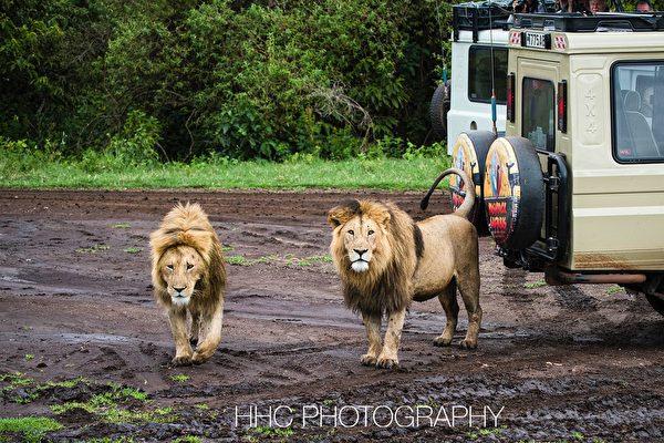 走進非洲(6)恩戈羅恩戈羅自然保護區