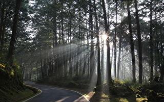 明起自28日為止  全國各森林遊樂區「暫停開放」