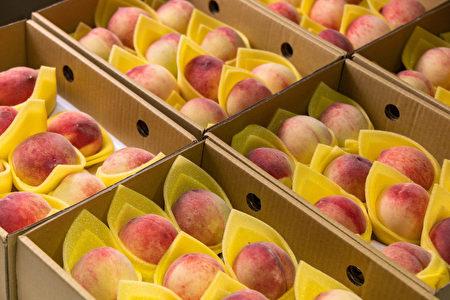妈妈桃开始量产的季节,今年虽然水汽不足,但是颗颗外观红润饱满,内馅皮薄多汁,闻起来香气四溢。
