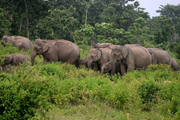 十八头印度大象一天内集体死亡 疑遭雷击
