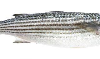 男子澳洲度假弄丟婚戒 被發現套在魚身上