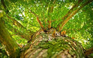 """怕家人感染 确诊印男搬到树上""""自我隔离"""""""