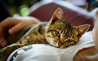 流浪猫报恩 异常举止助主人及早发现癌症