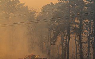 新泽西州立森林公园发生重大火灾 火势已控无人伤亡