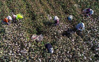 忧人权 美津浓等日本大公司决定停用新疆棉