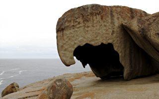 南澳袋鼠岛今年年底拟建新游客中心