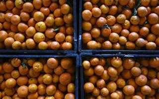 昆州橘農因勞動力短缺倒掉成噸柑橘