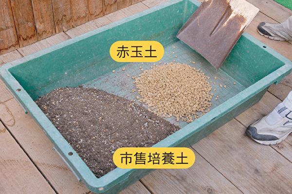 調配果樹盆栽專用的培養土  4步驟一學就會