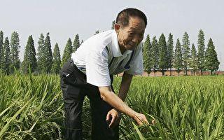千百度:网友揭中共神化大陆水稻专家袁隆平