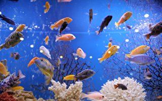 英男爱看鱼 花2万英镑把房屋改成巨大水族馆
