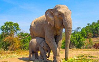印度一身陷泥塘小象 脫險後這樣表達謝意