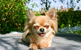 研究:动物在玩耍时也会笑