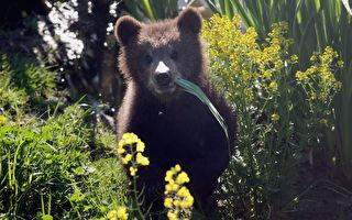 夏季露營與野生動物(1)