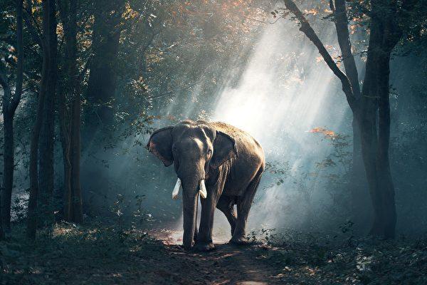 印度象夫过世 大象前来吊唁 场面催人泪下