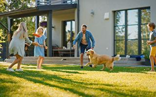 疫情下居家时间更多 澳人掀起后院棚屋改造潮
