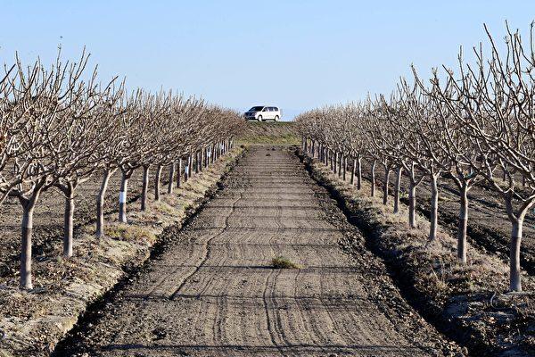 加州極度乾旱或致農作物減產 農民損失重