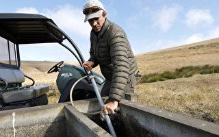 组图:加州持续干旱 牧场增建引水设施