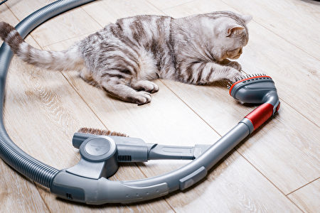 Vacuum,Cleaner,With,A,Nozzle,For,Cleaning,Spetsilno,Animals,寵物吸毛器