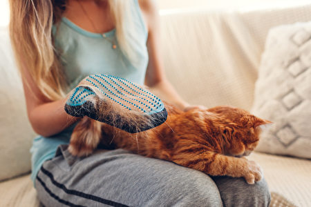 Brushing,Cat,With,Glove,To,Remove,Pets,Hair.,Woman,Taking